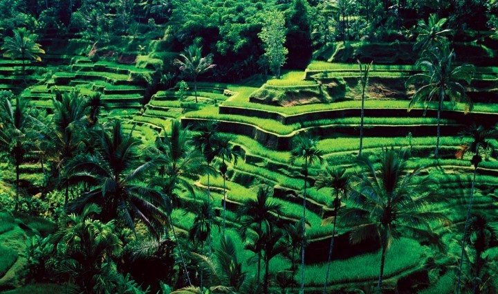 Ubud: often referred to as the spiritual centre of Bali.