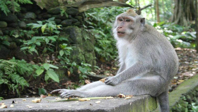 animal lover's guide to Bali