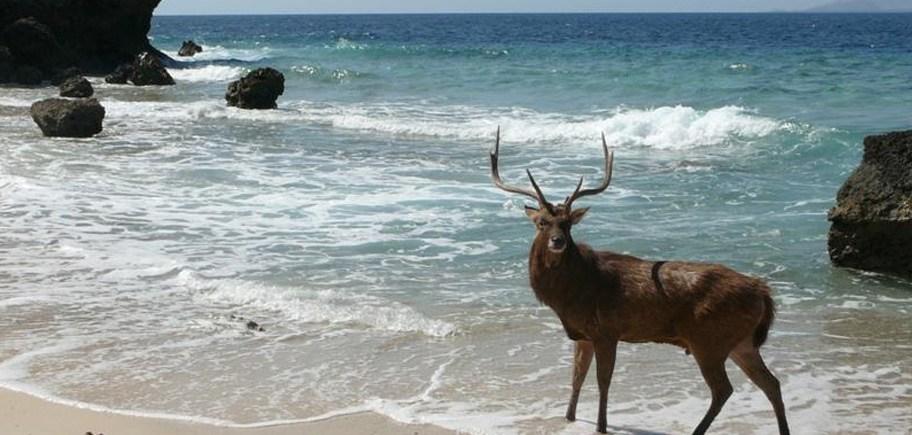 West Bali National Park and the Menjangan Eco Retreat